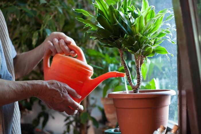 В макаронном отваре много витаминов, полезных для растений. / Фото: Dekormyhome.ru