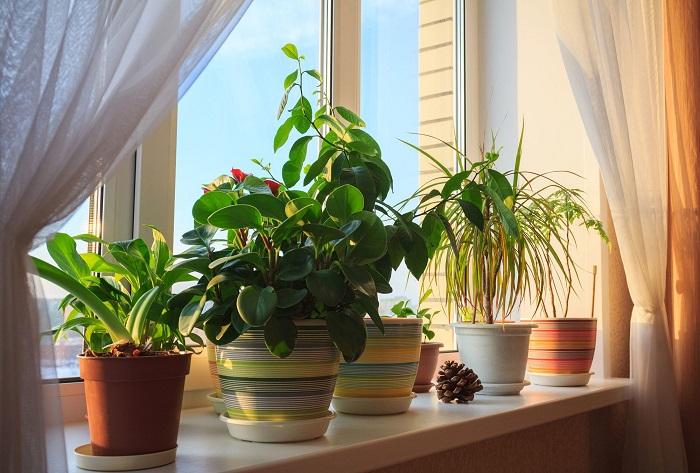 Растения на подоконнике - избитый прием. / Фото: sadovnikam.ru