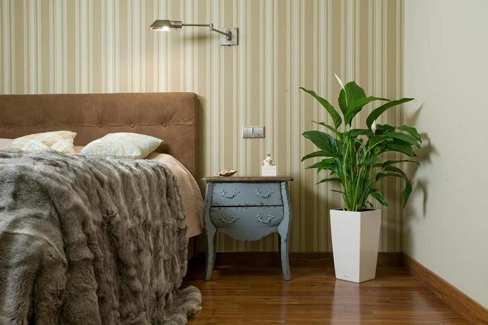 Комнатные растения делают комнату уютнее. / Фото: Zen.yandex.ru