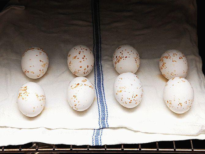 Яйца нужно класть на полотенце. / Фото: brendoptom.ru
