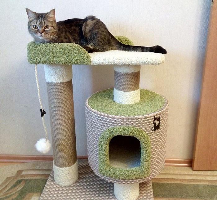 Не все кошки оценивают по достоинству домик с когтеточкой. / Фото: catgadgets.ru