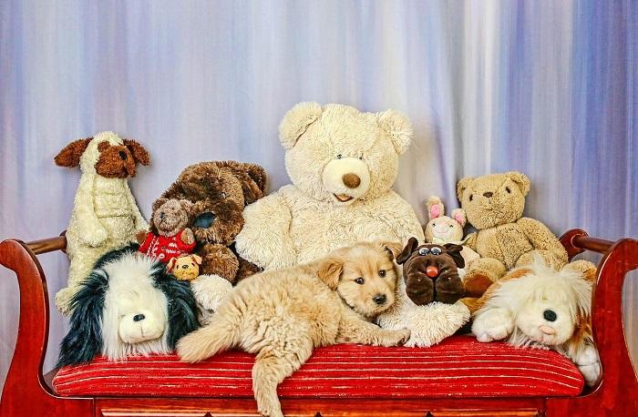 Мягкие игрушки должны лежать в коробке, а не на диване. / Фото: chepkadog.net