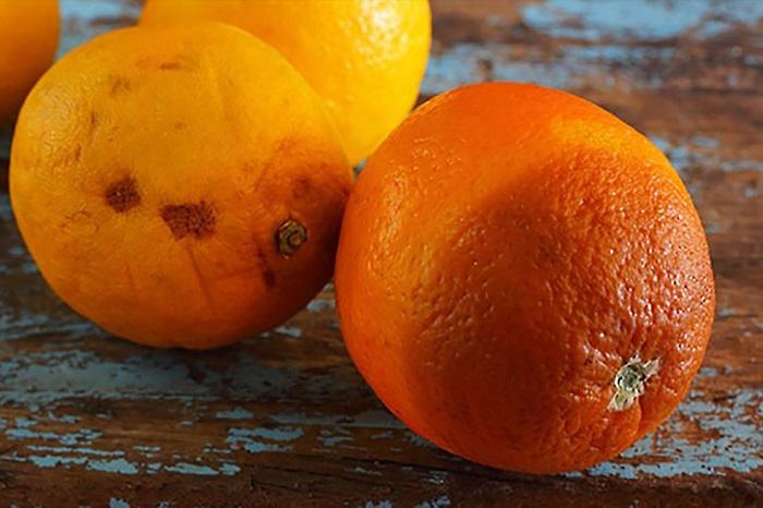 Из мякоти испорченного апельсина можно сделать сок. / Фото: factroom.ru