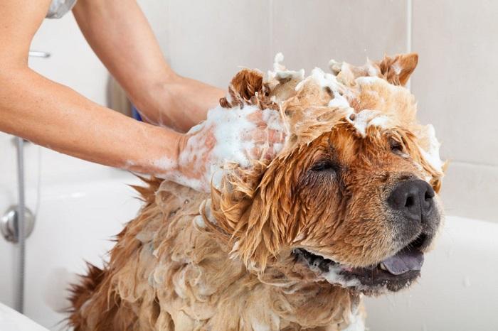 Шампунь с кофейной гущей сделает шерсть собаки более мягкой. / Фото: gav-gav.su