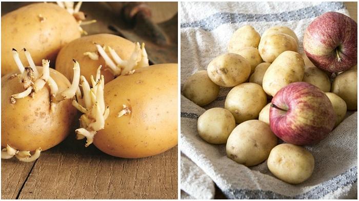 Яблоки да дадут картофелю прорасти. / Фото: vichivisam.ru