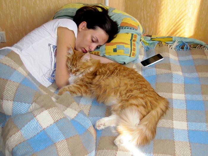 Кот на кровати - это негигиенично. / Фото: klkfavorit.ru