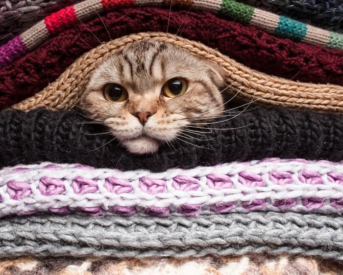 Не позволяйте коту спать на ваших вещах. / Фото: pinterest.ru
