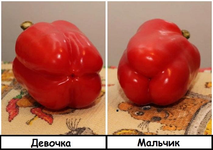 «Мальчика» лучше есть свежим, «девочку» - в составе других блюд. / Фото: onashem.mediasole.ru