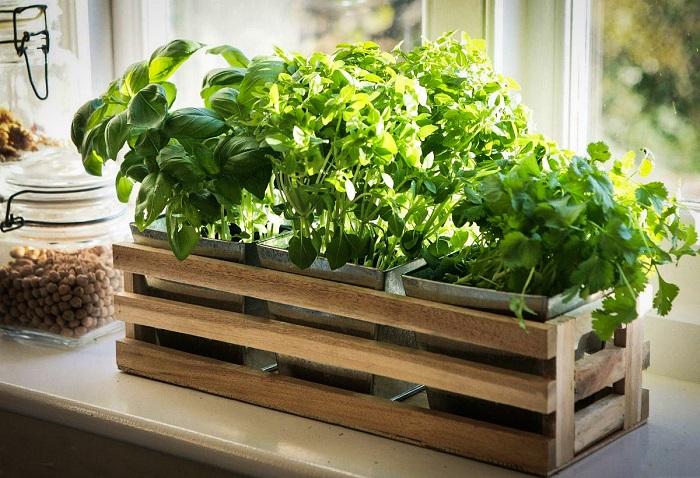 На подоконнике можно выращивать зелень для будущих блюд. / Фото: npalagina.ru