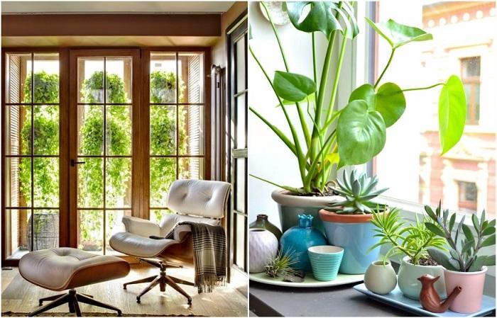 Комнатные цветы на подоконнике или за окном отвлекут внимание