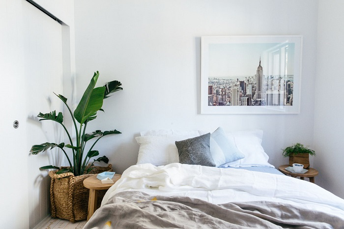 Комнатные растения в спальне способствуют крепкому сну. / Фото: gd-home.com