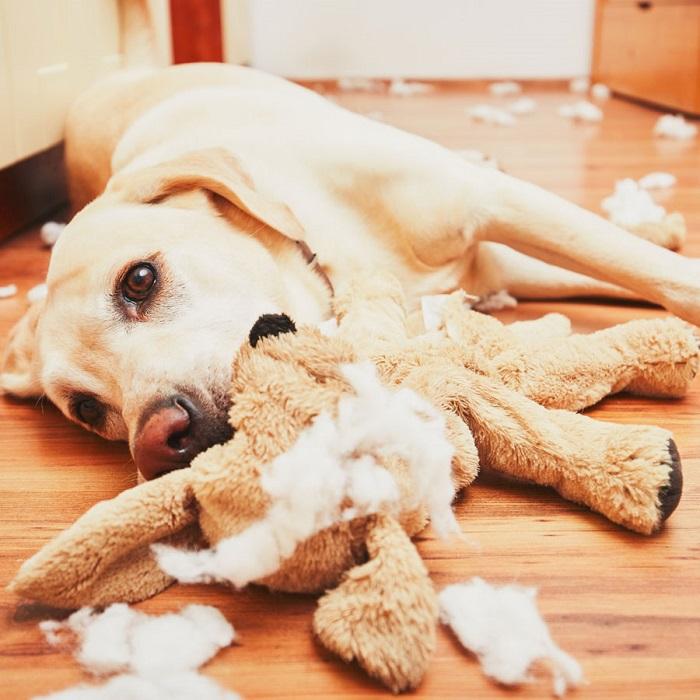 Если покупать собаке мягкие игрушке, от них вскоре ничего не останется. / Фото: outlinist.com