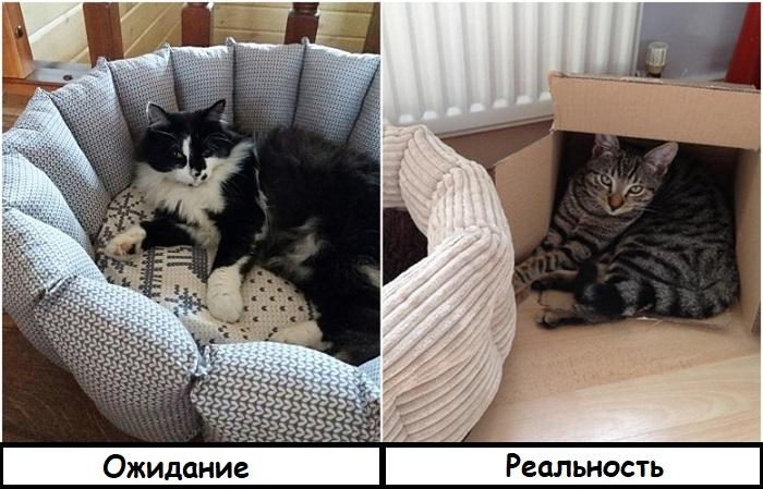 Кот спит не в лежанке, а в коробке. / Фото: kakprosto.ru