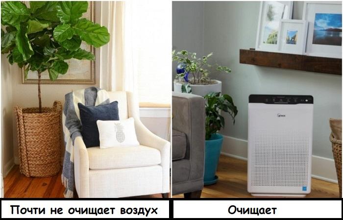 Растения пусть стоят для красоты, а воздух очищает специальный прибор