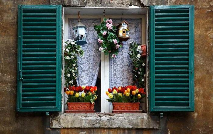 Комнатные растения украшают деревянные ставни. / Фото: proexpedition.ru