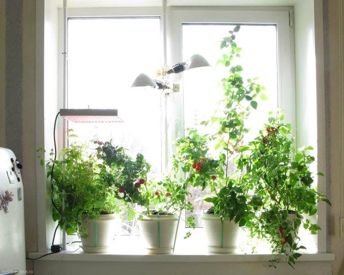Если на подоконнике стоят цветы, ему нельзя будет найти более полезное применение. / Фото: repairshome.ru