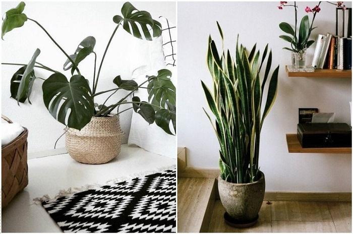 Растения очищают воздух и делают комнату уютнее. / Фото: soccerlevel.ru