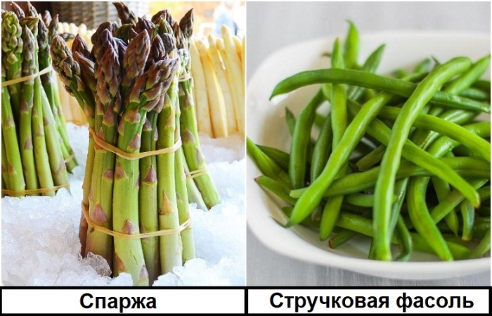 Спаржу и фасоль можно отличить по внешним признакам