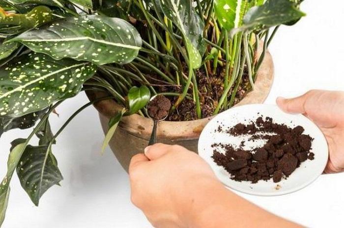 Кофейная гуща является хорошим удобрением для растений. / Фото: stroypomochnik.ru