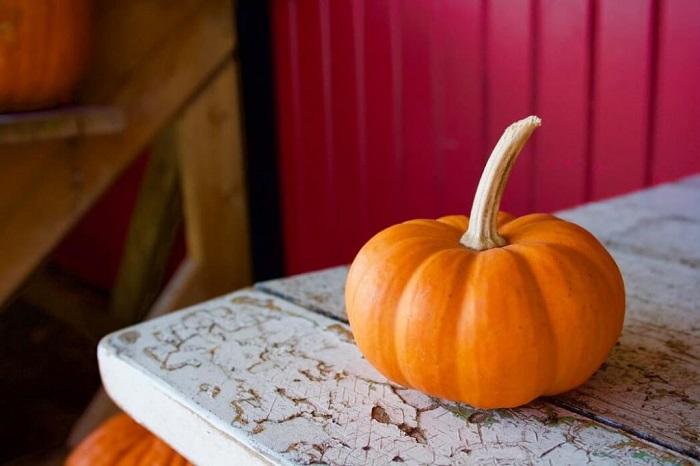 Обыкновенная тыква выглядит, как карета из сказки про Золушку. / Фото: pinterest.ru