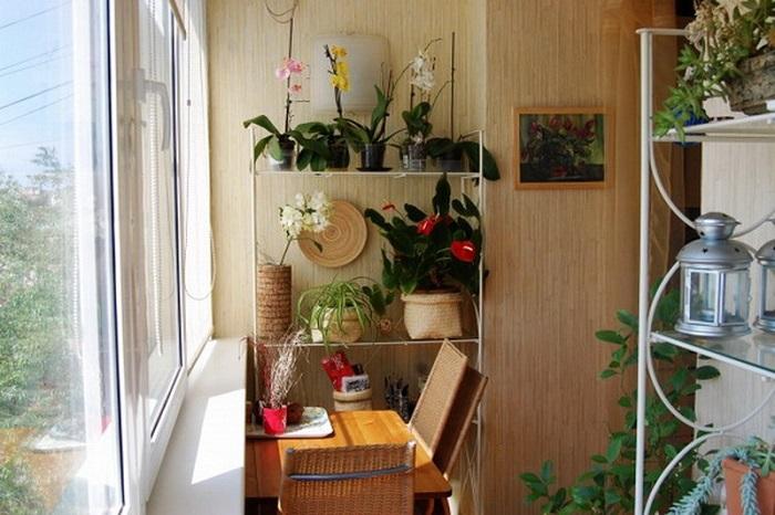 Комнатные растения создают здоровый микроклимат в квартире. / Фото: tomatoz.ru