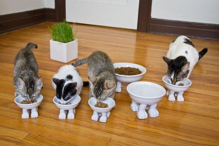 В мисках домашних животных может быть бактерия сальмонелла. / Фото: toprichali.ru