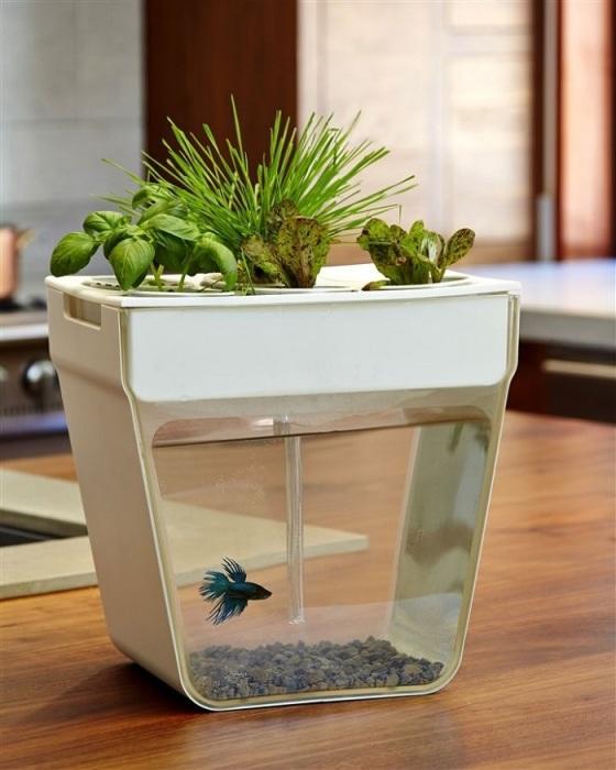 Грязная вода из аквариума - отличное удобрение для растений. / Фото: tr.pinterest.com