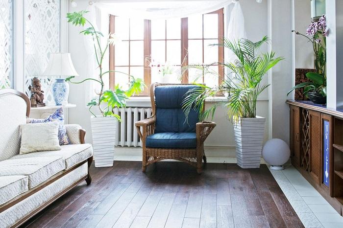 Комнатные растения добавляют уюта в любой интерьер. / Фото: tvoya-banya.ru