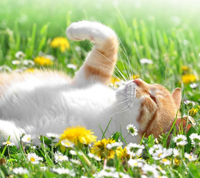 Солнечные ванны помогут расслабиться и поднять настроение. / Фото: wallhere.com