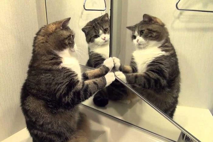 Коты любят трогать зеркала. / Фото: xoxo.ru