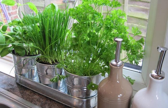 Выращивайте на подоконнике травы для блюд. / Фото: dekormyhome.ru