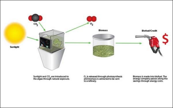 Как сделать в домашних условиях биотопливо