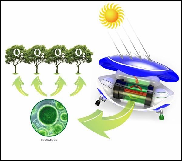 Дыханию под водой поможет фотосинтез