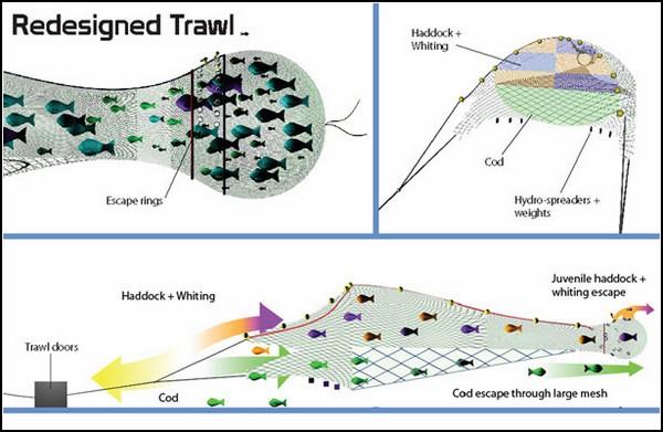 Электронная сеть для рыбы: SafetyNet