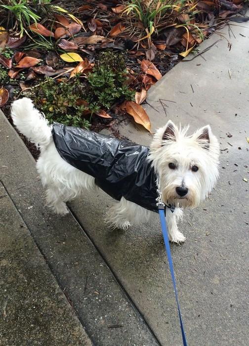 Как сделать дождевик для собаки за 15 минут и почти бесплатно