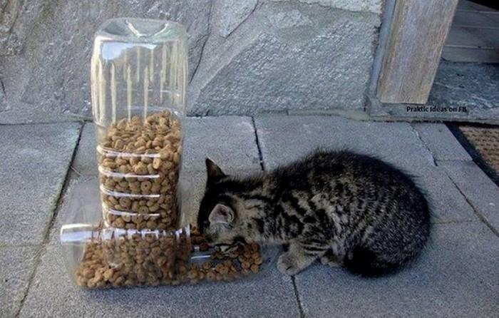 Как сделать автоматическую кормушку для котов
