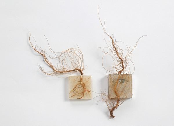 Коллекция «натуральных» колец Дании Чельмински (Dania Chelminsky)