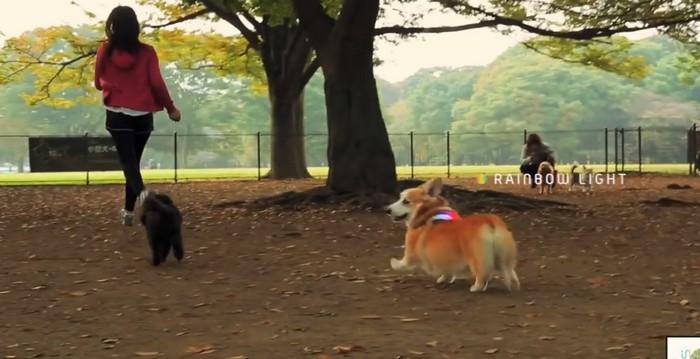 Как понять, что чувствует собака: ошейник Inupathy