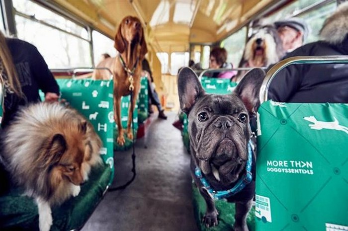К9 от More Than – первый экскурсионный тур для собак и их хозяев