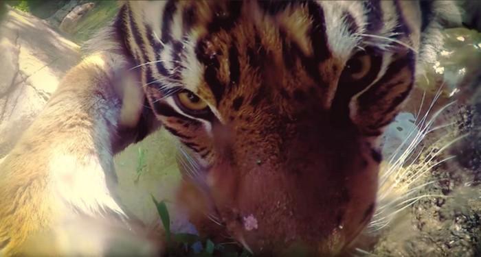 Zoogle Selfies – тематический проект Google, в котором животные делают селфи