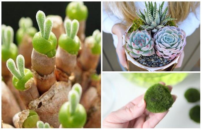 10 комнатных растений с очаровательной внешностью