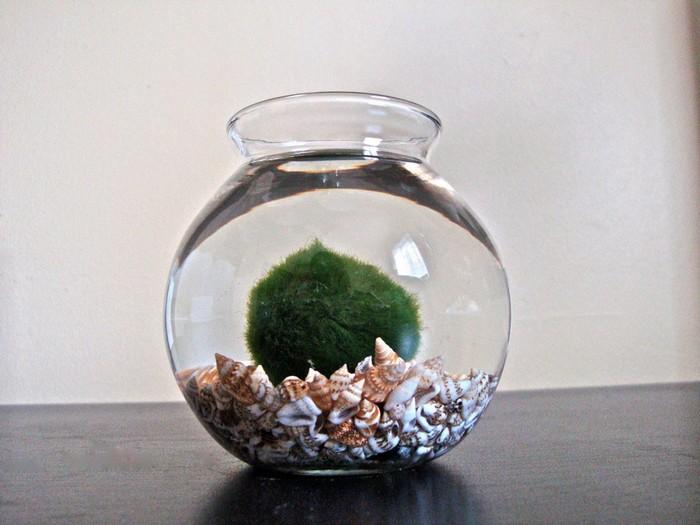 Японцы знают толк в миловидных растениях