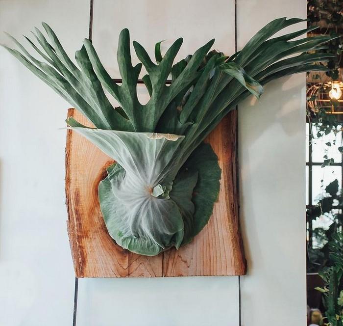 Платицериум – растение, которое так и хочется повесить на стену