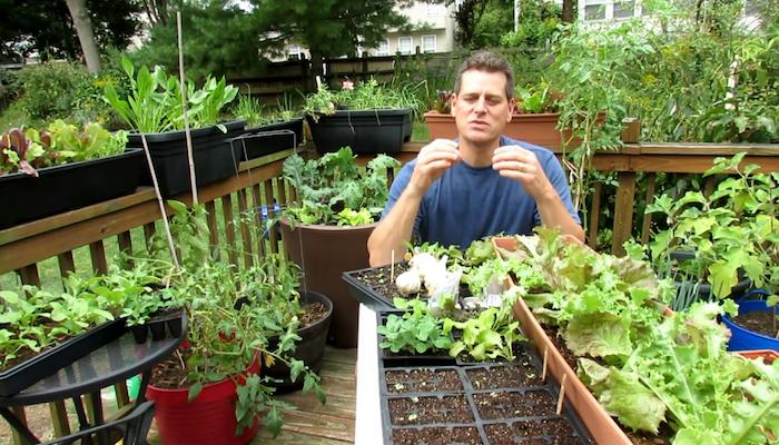 Автор и всходы томатов после органической подкормки.