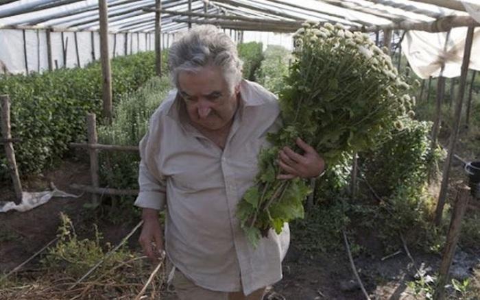 Хосе с женой годами выращивали цветы на продажу.