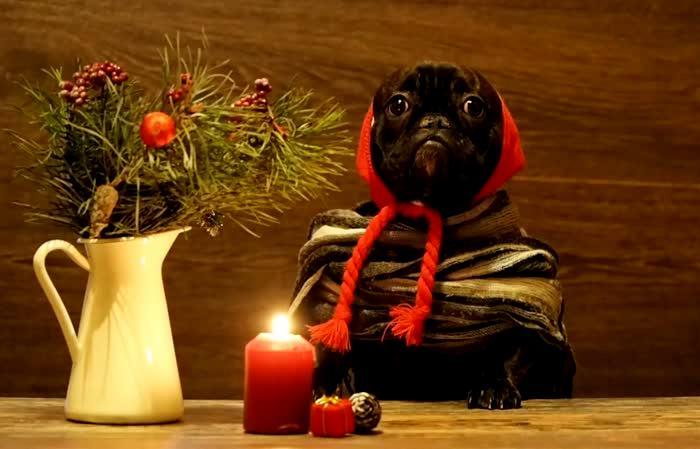 Чтобы свечи горели всю новогоднюю ночь и даже дольше.