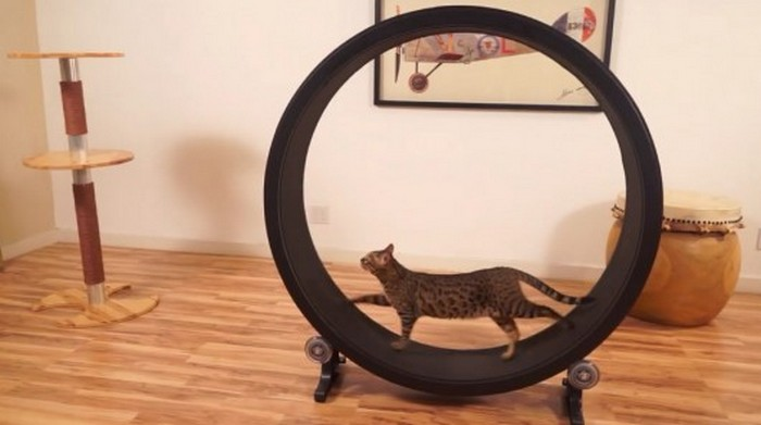 One Fast Cat � �������� ��� �����