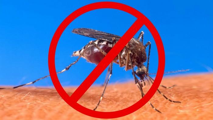 Отпугиваем комаров