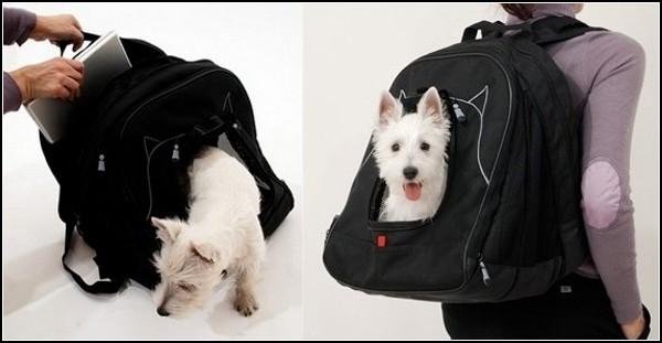 Обзор самых необычных рюкзаков: рюкзак для питомцев