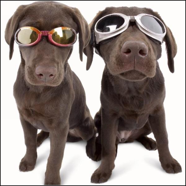 Больше, чем просто защита от солнца: очки для собак